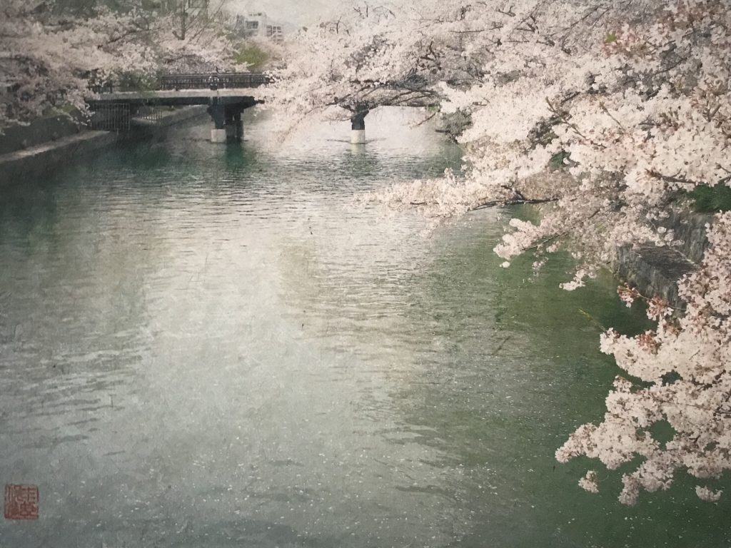 Sakura at Lake Biwa Canal