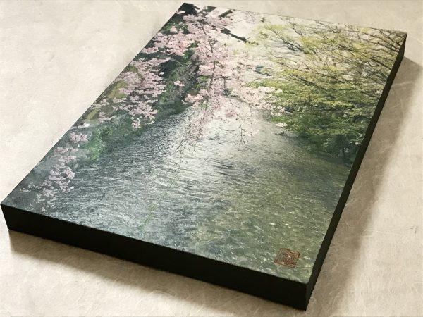 Sakura at Gion Shirakawa
