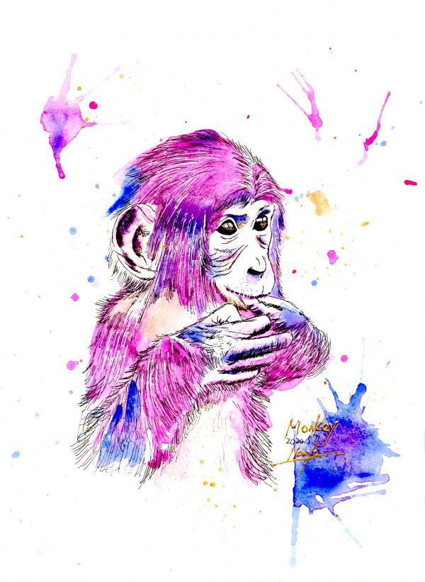 dynamic monkey