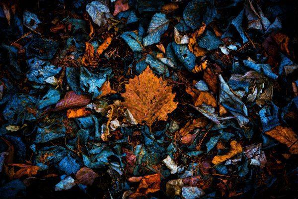 Life and Death by Yosuke Kurashima