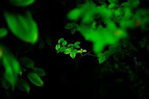 Yosuke Kurashima - Photography - JCAT artist