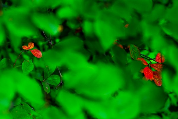 Yosuke Kurashima Solo Exhibition Life of Leaf ~ My Point of View ~ JCAT Online Gallery